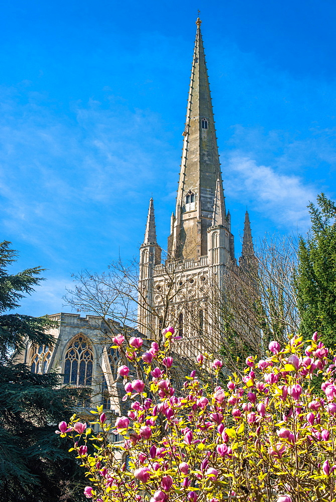 The Spire of Norwich Cathedral, Norwich, Norfolk, East Anglia, England, United Kingdom, Europe