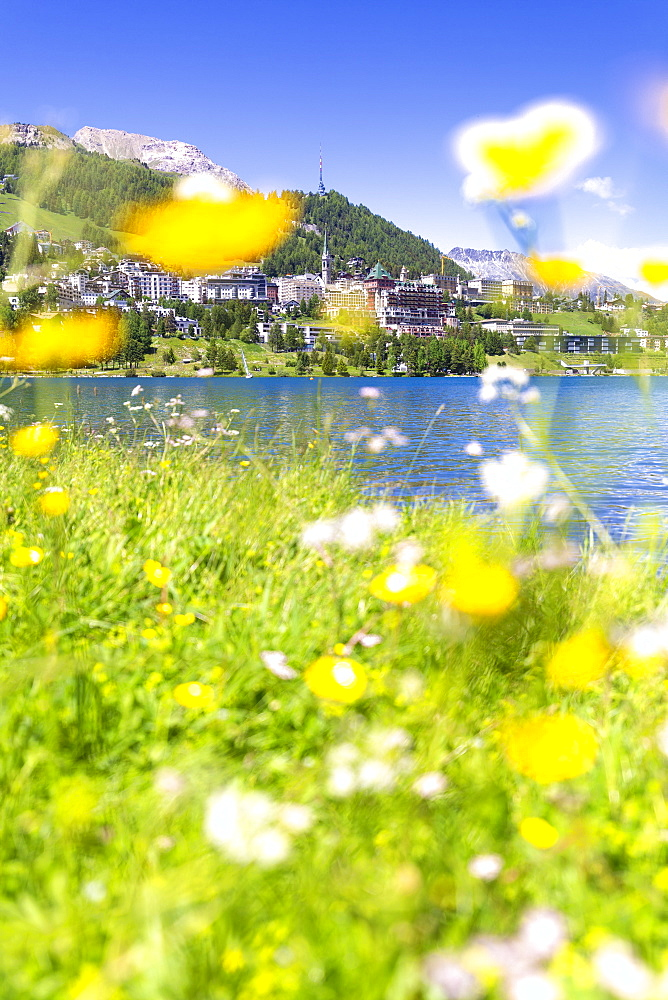 Summer flowers in Sankt Moritz (St. Moritz), Engadine, Graubunden, Switzerland, Europe - 1269-202