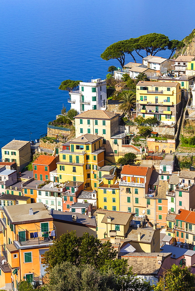 Traditional houses of Riomaggiore, Cinque Terre, UNESCO World Heritage Site, Liguria, Italy, Europe