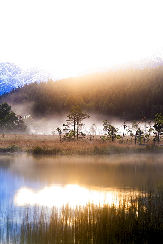 Foggy sunrise at the pond in the Pian di Gembro reserve. Pian di Gembro, Valtellina, Lombardy, Italy, Europe.