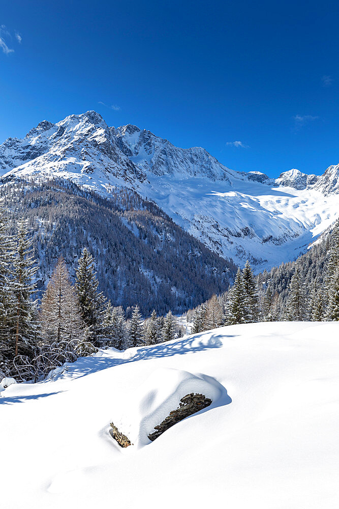 Winter landscape after snowfall with view of the group of Disgrazia, Chiareggio, Valmalenco, Valtellina, Lombardy, Italy, Europe - 1269-665