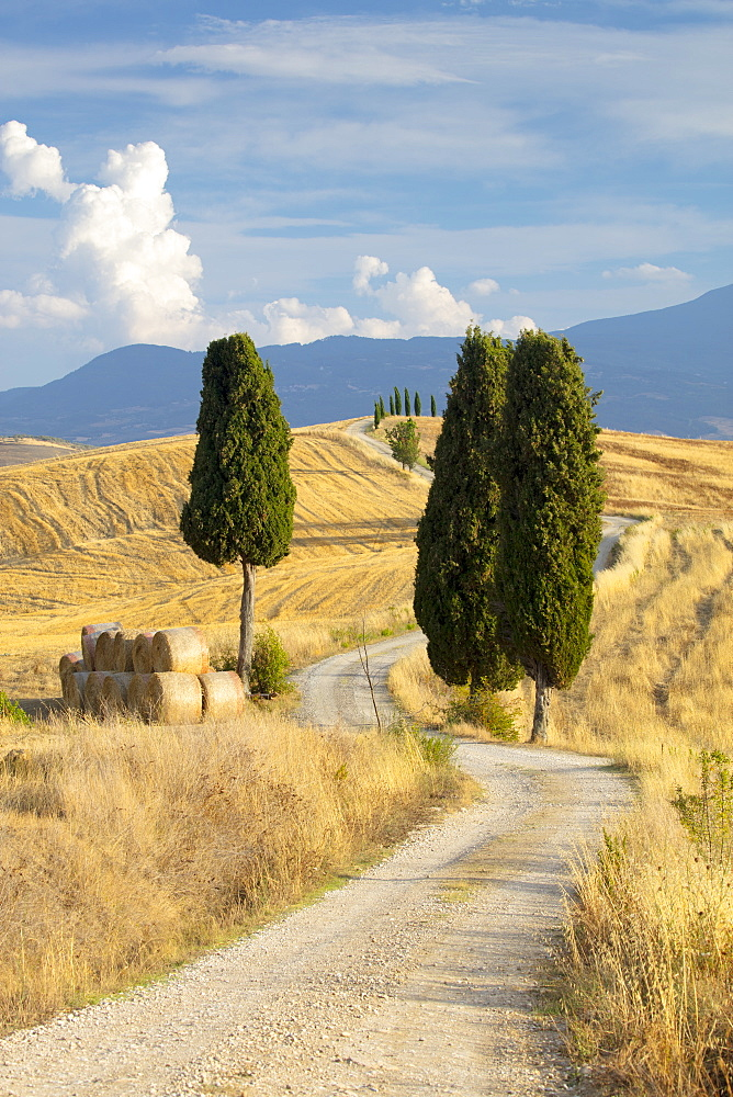 Cypress trees and fields in the afternoon sun at Agriturismo Terrapille (Gladiator Villa) near Pienza in Tuscany, Italy, Europe - 1284-57