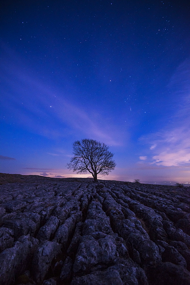 A lone tree on the limestone pavement on the hills above the village of Malham in the Yorkshire Dales, Yorkshire, England, United Kingdom, Europe