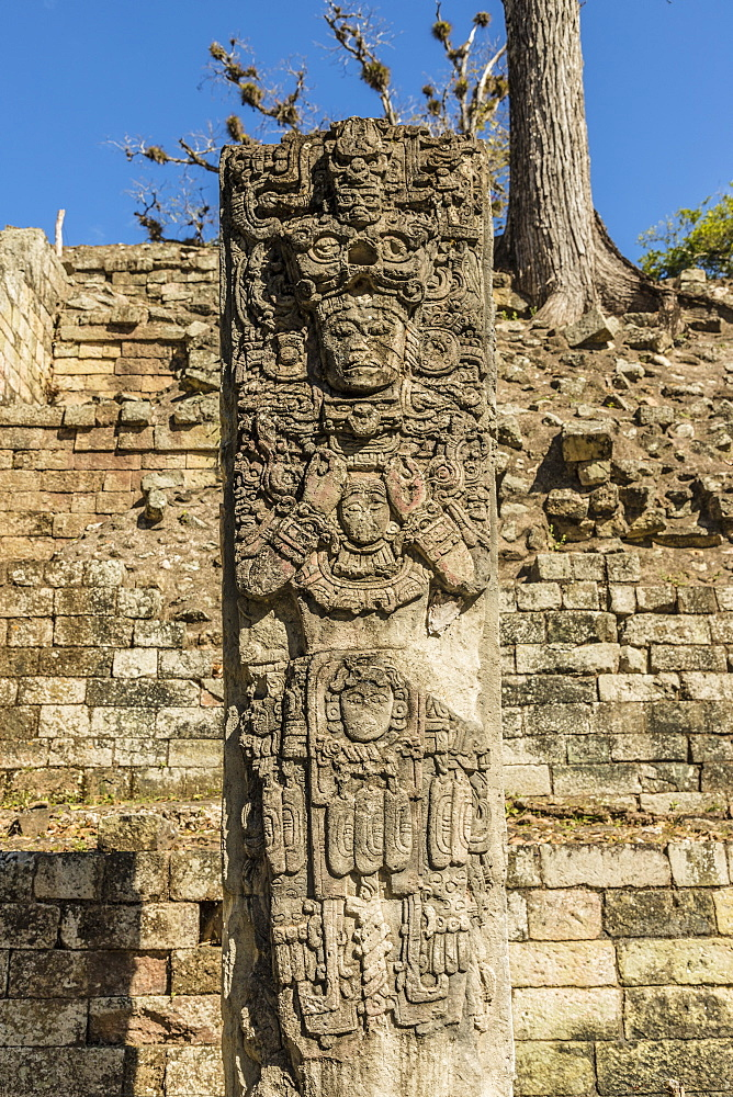 The Stelae P carving at Copan Ruins, UNESCO World Heritage Site, Copan, Honduras, Central America