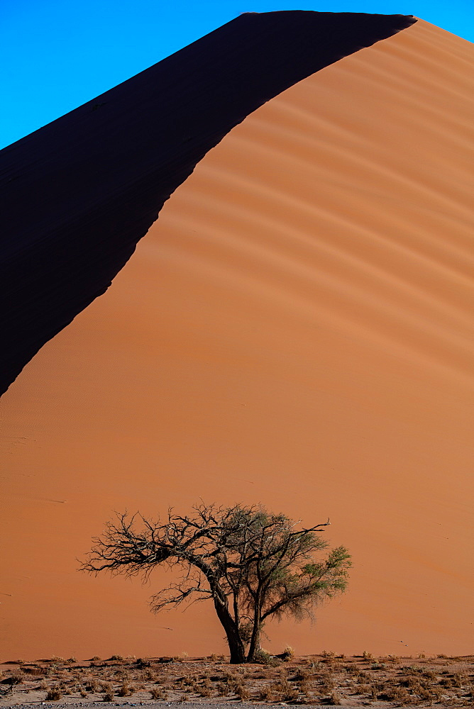 Sossusvlei National Park, sunset at Dune along the main highway to Deadvlei, Namibia, Africa - 1304-37