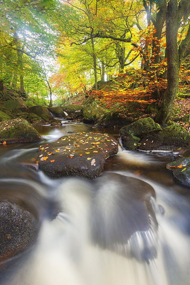 Autumn colours at Padley Gorge, Peak District National Park, Derbyshire, England, United Kingdom, Europe