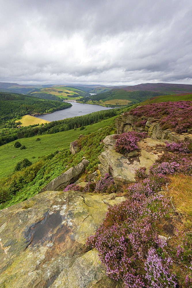 Bamford Edge in summer with heather overlooking Ladybower reservoir, Bamford, Derbyshire, England, United Kingdom, Europe