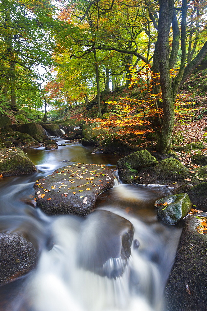 Padley Gorge in autumn colours, Peak District National Park, Derbyshire, England, United Kingdom, Europe