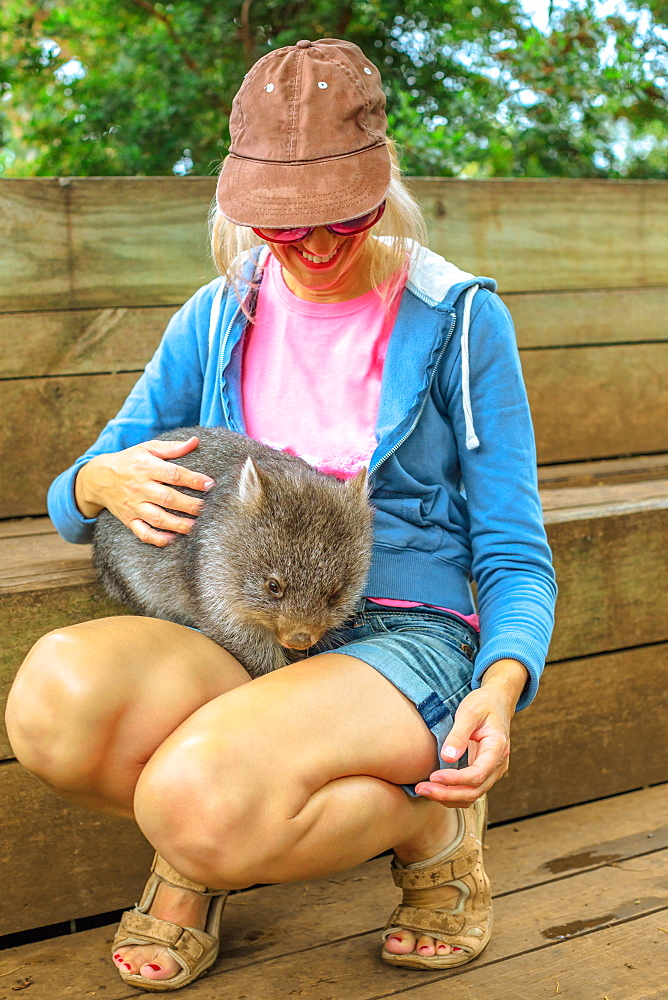 Happy tourist woman holds and caresses a wombat, a marsupial Australian mammal, Tasmania, Australia, Pacific