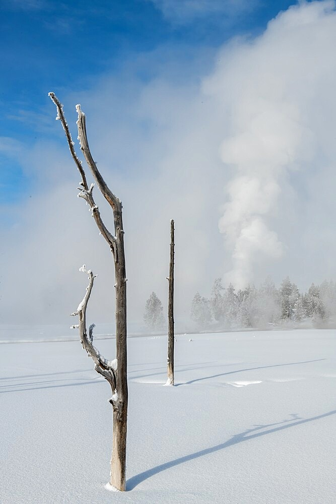Dead trees in a snowscape with fog and geyser eruption, Yellowstone National Park, Wyoming, United States - 1335-144