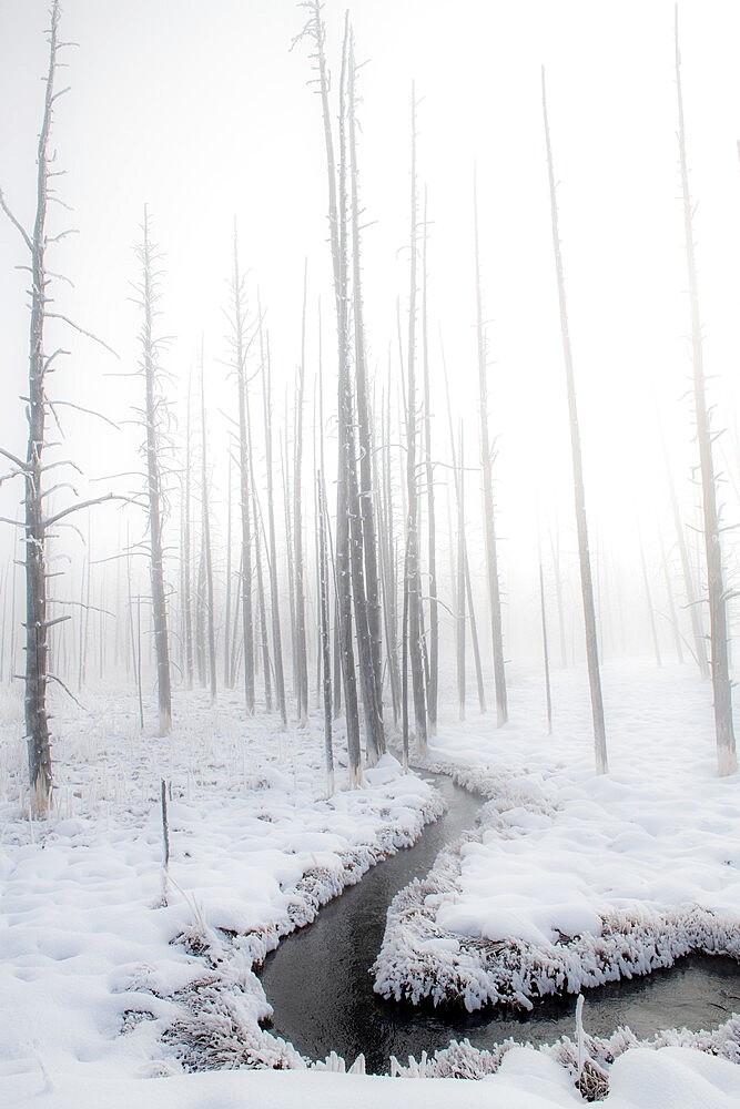 Snowscape with stream and trees in the fog, Yellowstone National Park, Wyoming, United States - 1335-147