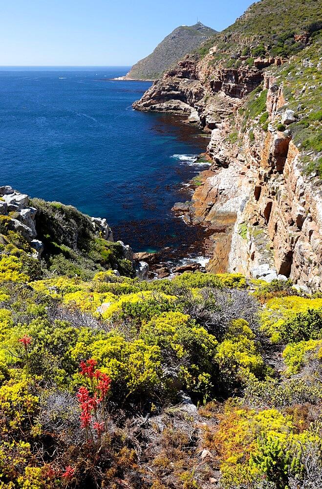 Cape Point Nature Reserve - False Bay - 1338-17