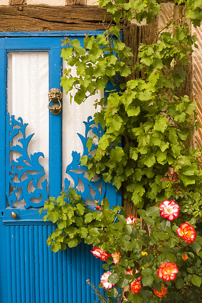 A bright blue painted wooden door with roses growing in front, Normandy, France, Europe