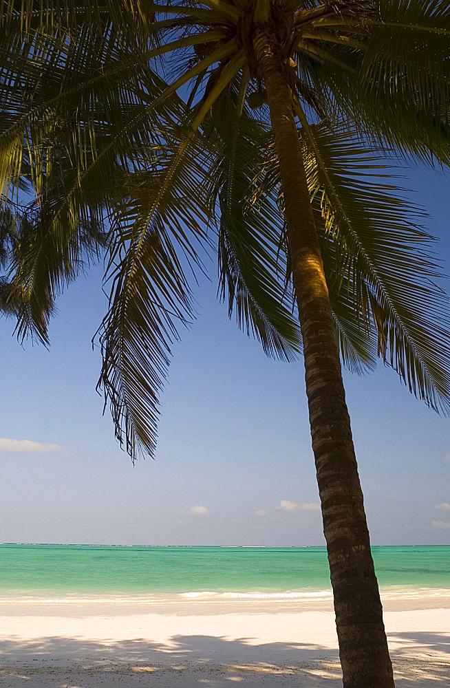 Palm trees above emerald sea, Paje Beach, Zanzibar, Tanzania, East Africa, Africa