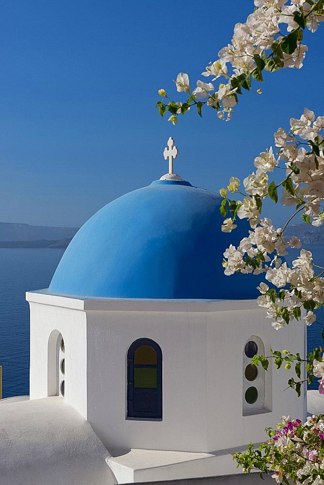 Bougainvillea around the Church of St. Nicholas in Oia, Santorini, The Cyclades, The Aegean, Greek Islands, Greece, Europe