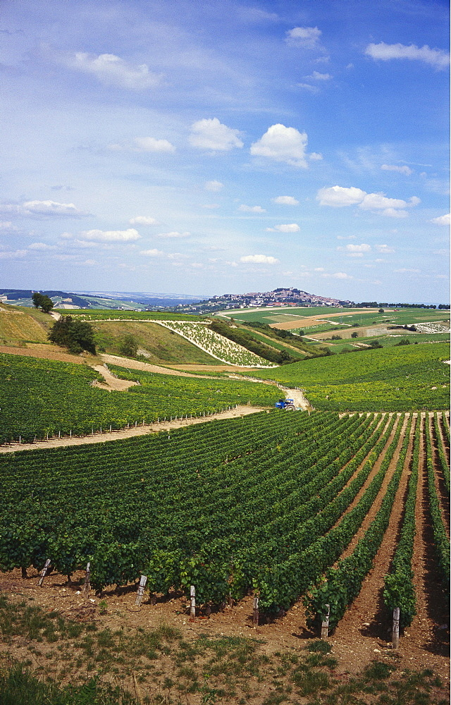 Vineyards, Loire Valley and Sancerre in the Distance, France - 197-3499