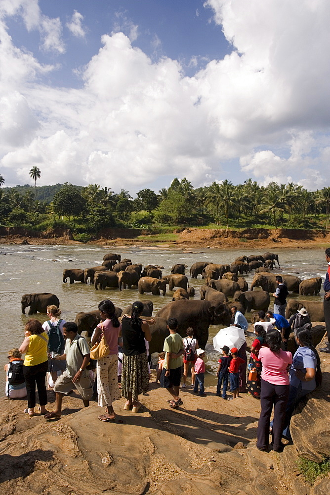 Pinnewala Elephant Orphanage near Kegalle, Hill Country, Sri Lanka, Asia