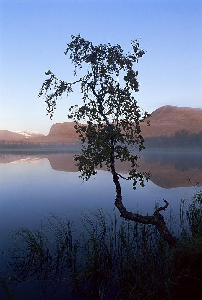 Autumn colours, Laponia, UNESCO World Heritage Site, Lappland, Sweden, Scandinavia, Europe - 252-8563