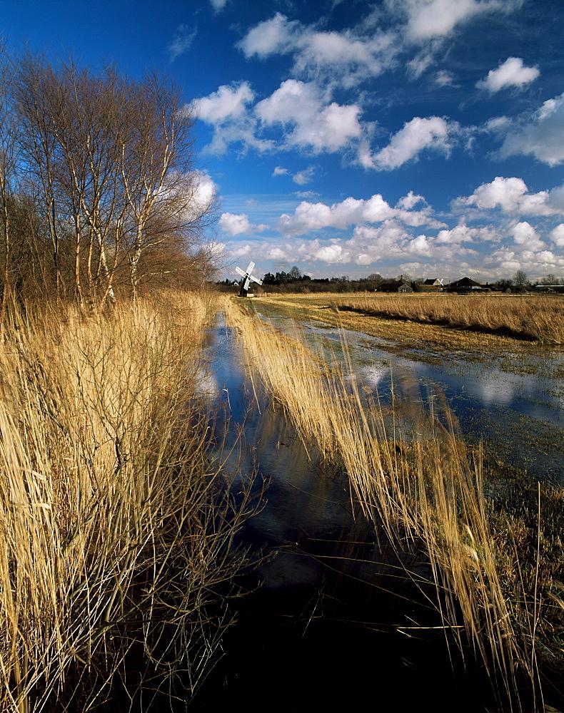 Wicken Fen, Cambridgeshire, England, United Kingdom, Europe