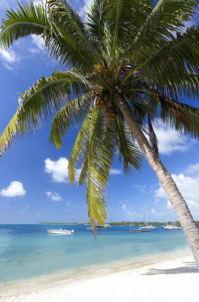Beach scene with palm trees, blue sky and boats moored on the Indian Ocean at Trou D'eu Douce, a village on the east coast of Mauritius where tourists catch ferries to the idyllic island of Ile Aux Cerfs, Mauritius, Indian Ocean, Africa