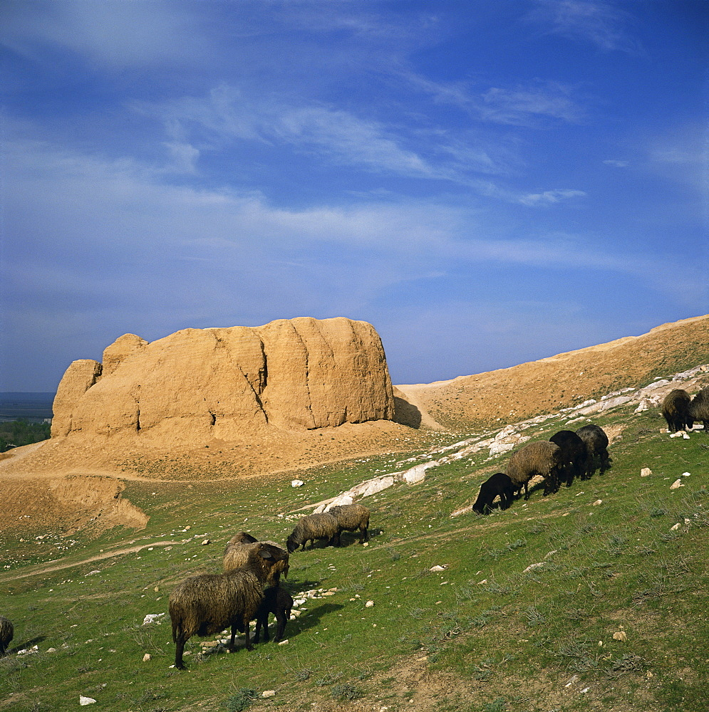 Sheep in front of the 4th century BC Alexander the Great fort at Nyrato, Uzbekistan, Central Asia, Asia
