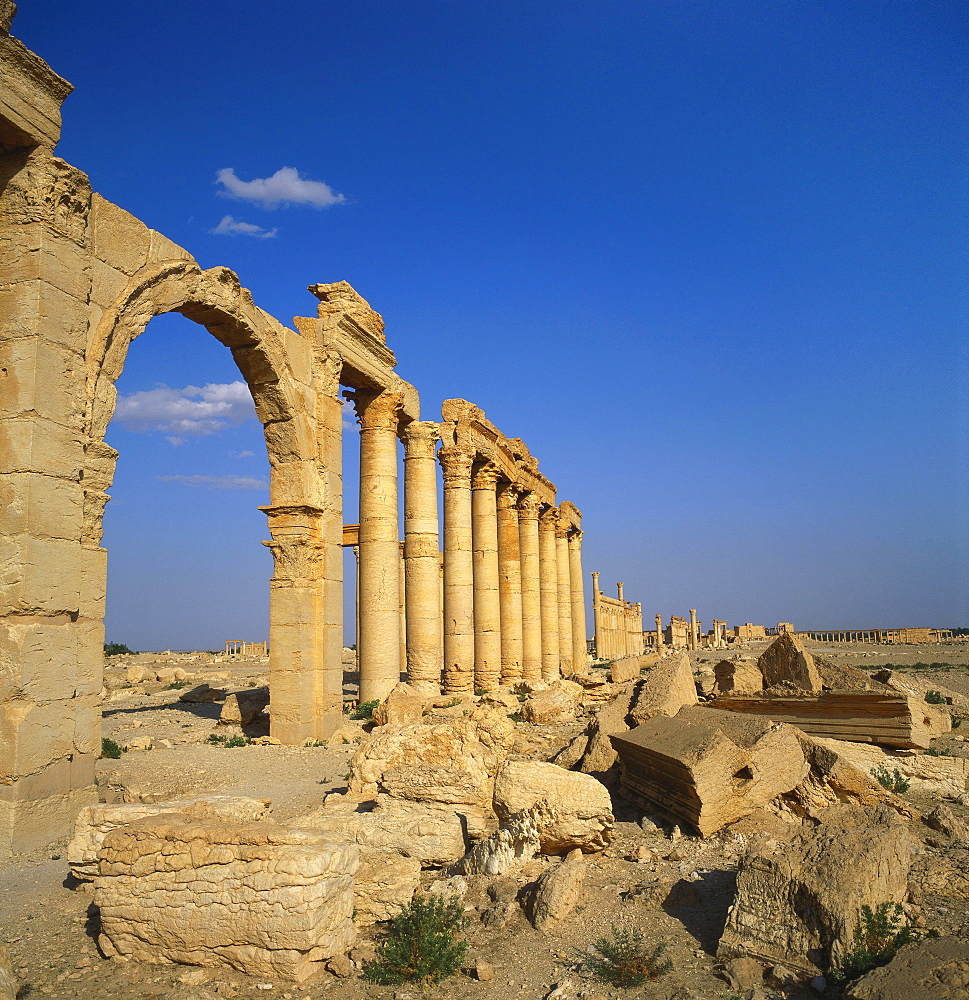 Classical Columns, Palmyra, Syria - 391-6141