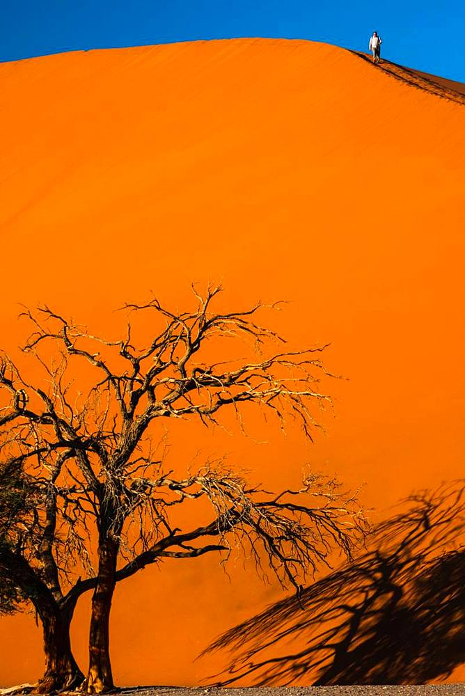 Man climbs down massive orange sand dune, dead tree in foreground, in Sossusvlei area, Namib Desert, Namib-Naukluft, Namibia