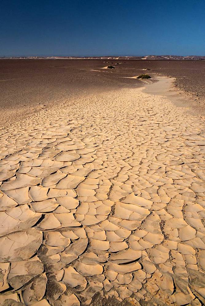 Baked white clay creates surreal pathway in the desert near the infamous Skeleton Coast, Namibia, Africa