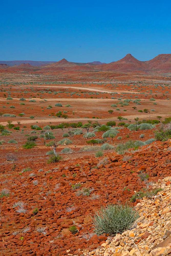 Red rocky landscape punctuated by thorn trees and bushes, north of Palmwag, Namibia