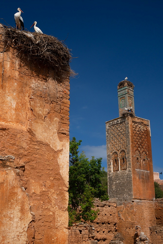 Islamic ruins of Chellah Necropolis, with storks nesting on ruined minaret & neighbouring Mosque of Abu Youssef, Rabat, Morocco