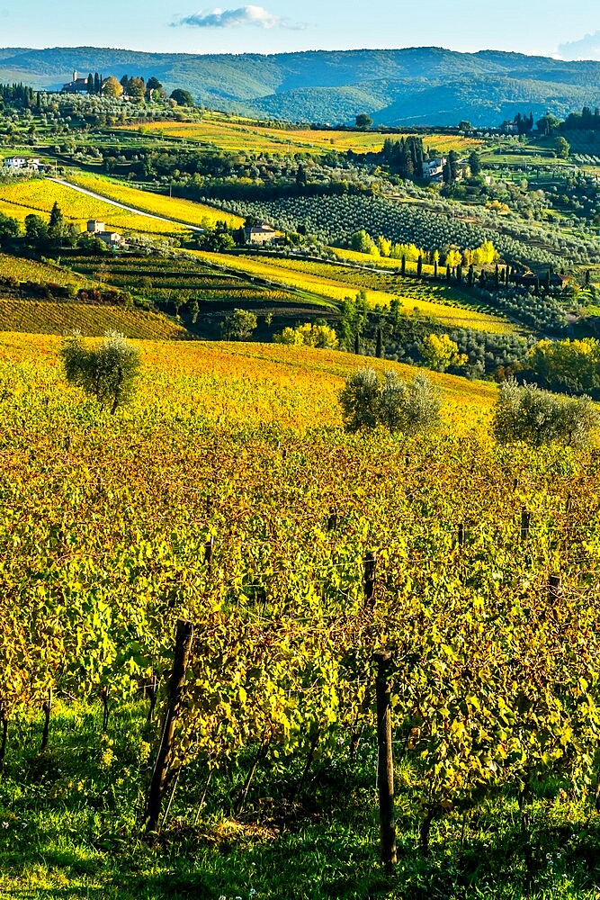 View of valley of Panzano in Chianti: patterned lines of vineyards, cypresses and olive trees with farmhouses, Tuscany, Italy - 450-4455