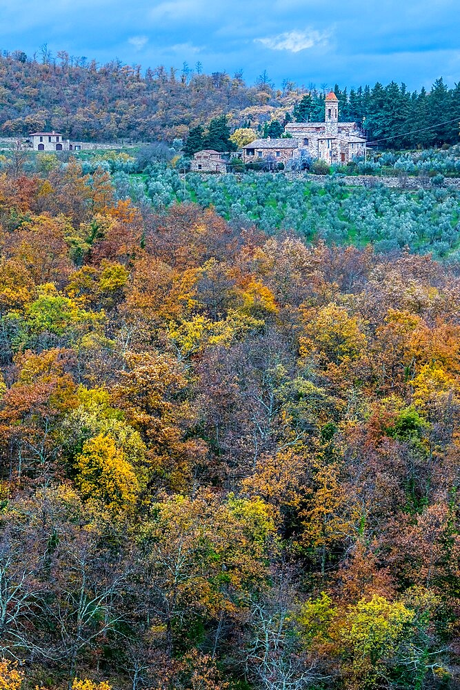 Pieve Di San Pietro A Sillano with olive trees and oak wood in foreground, Greve in Chianti, Tuscany, Italy - 450-4463