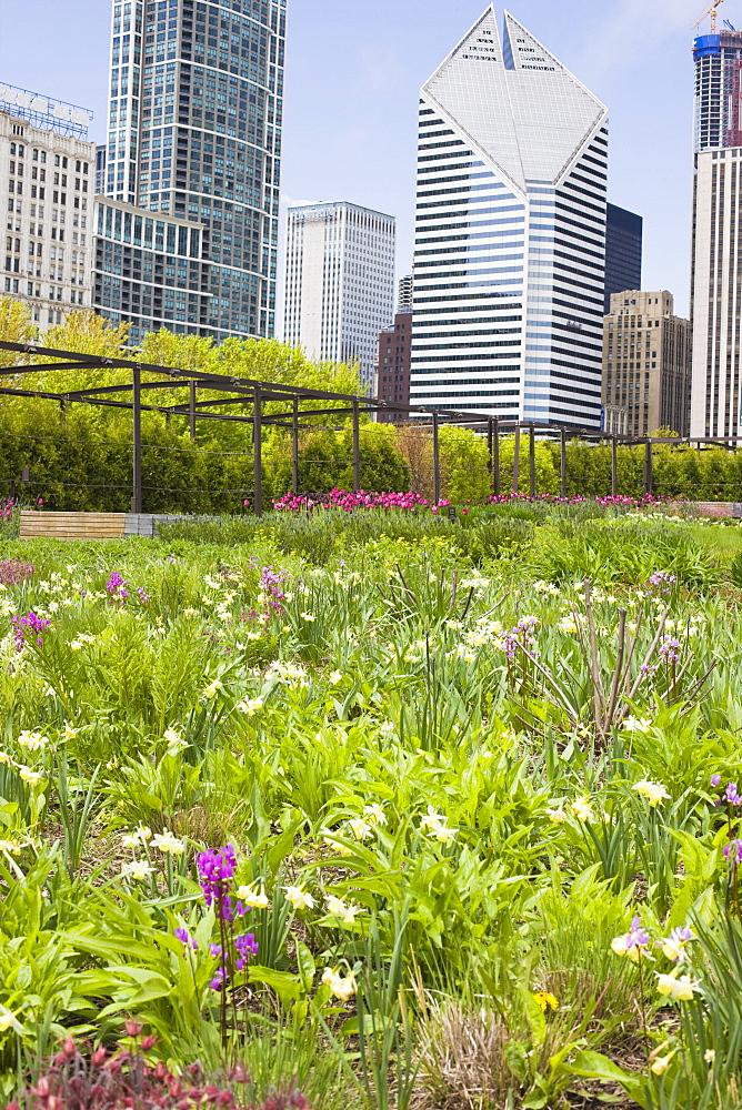 The Lurie Garden, Millennium Park, Chicago, Illinois, United States of America, North America