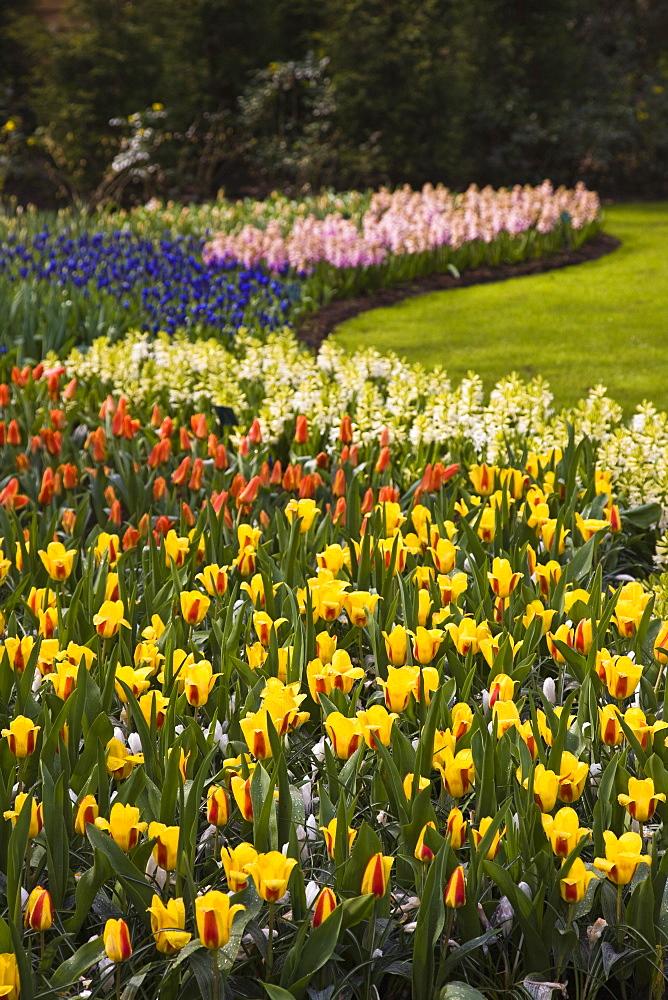 Tulip flower borders, Keukenhof, park and gardens near Amsterdam, Netherlands, Europe