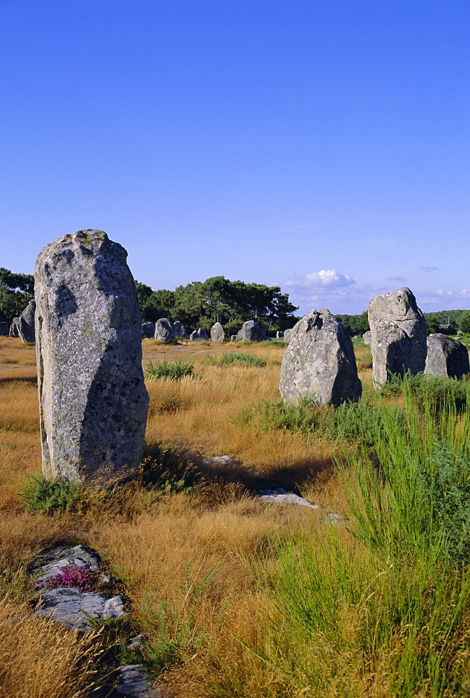 Standing stones, Carnac, Brittany, France, Europe