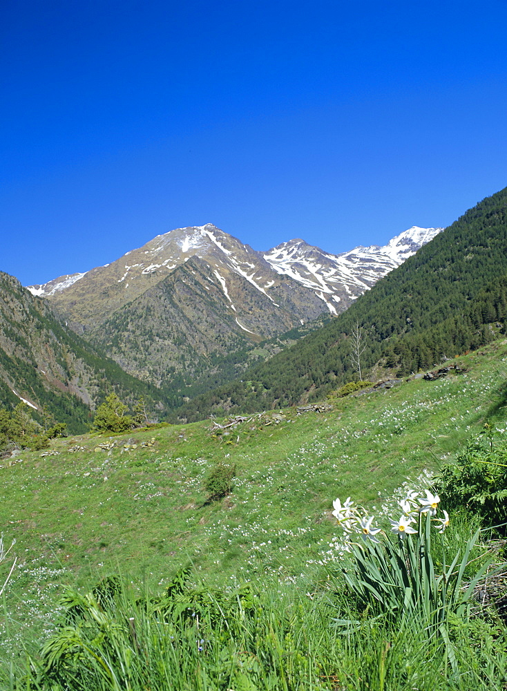 View north west across the Arinsal Valley to Pic de Coma Pedrosa in early summer, Percanela, Arinsal, Andorra