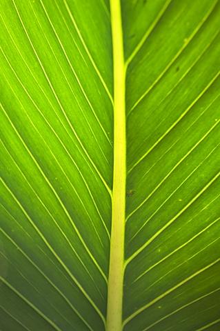 Monteverde Cloud Forest Reserve, Monteverde, Costa Rica - 641-5872