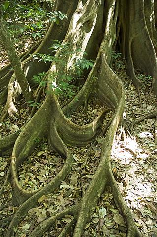Rincon de la Vieja National Park at foot of Rincon Volcano,  Gaunacaste, Costa Rica