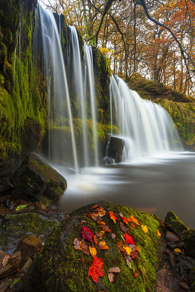 Sqwd Ddwli Waterfall, near Pontneddfechan, Afon Pyrddin, Powys, Brecon Beacons National Park, Wales, United Kingdom, Europe - 696-789
