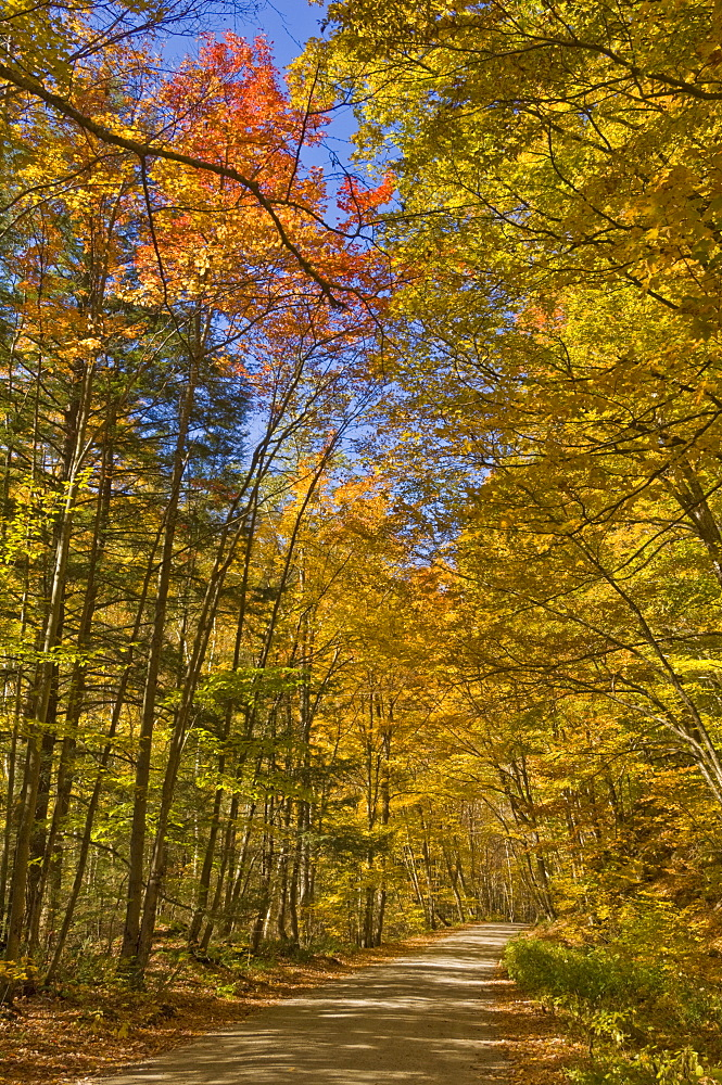 Autumn fall colours, Vermont back country road near West Arlington, Virginia, United States of America, North America