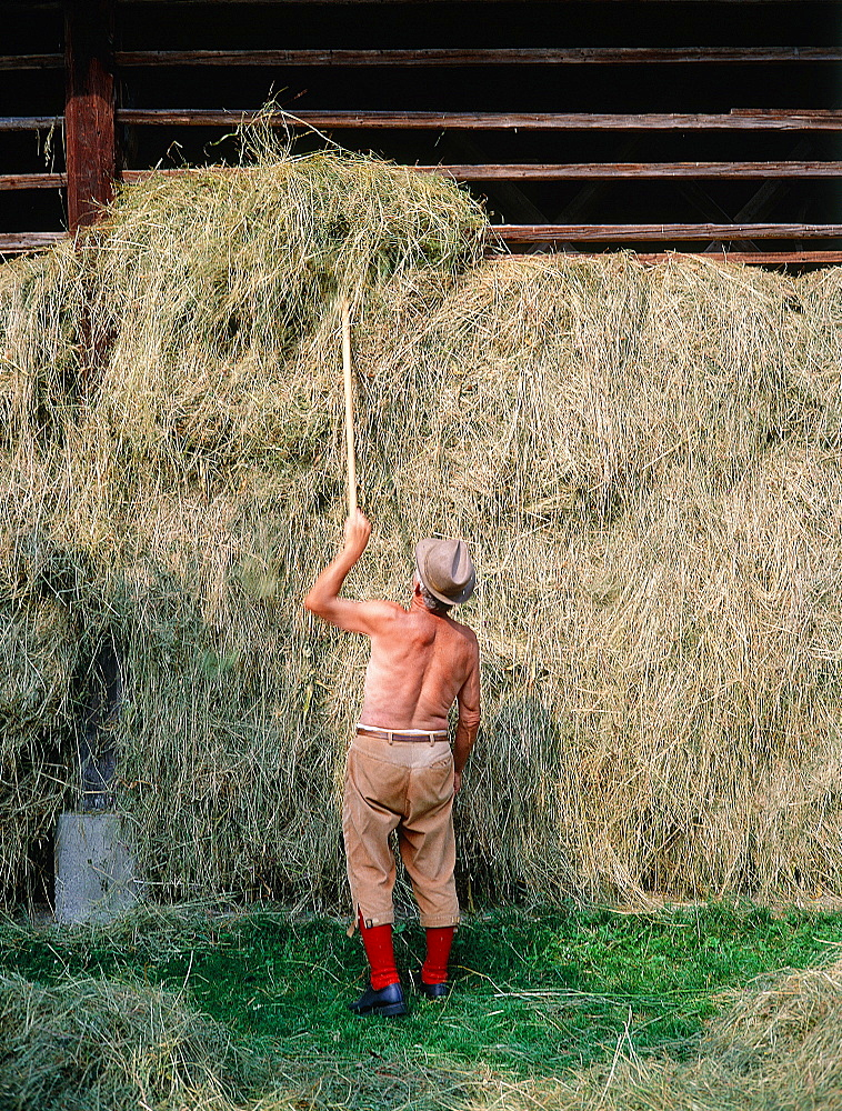 Slovenia, Alps, Upper Soca Valley, Peasant Taking Some Dry Hay For His Cows In A Farm