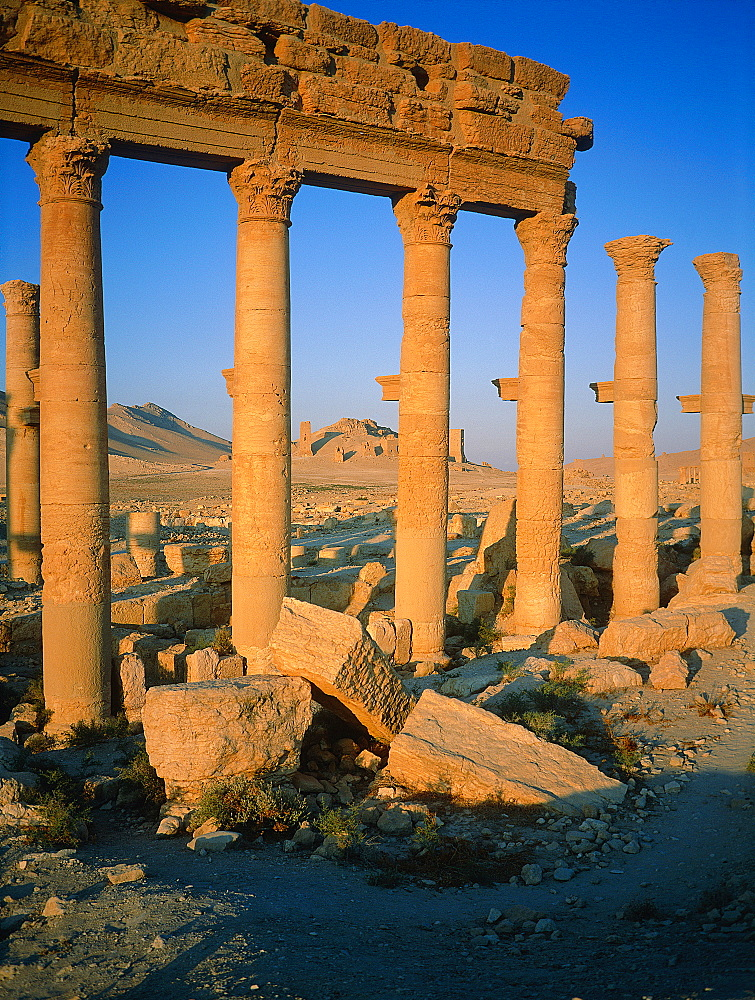 Syria, Palmyra Oasis, The Roman Ruins, Remnants Of The 1200m Colonnade Edging The Cardo (Main Road In The Roman City Center)