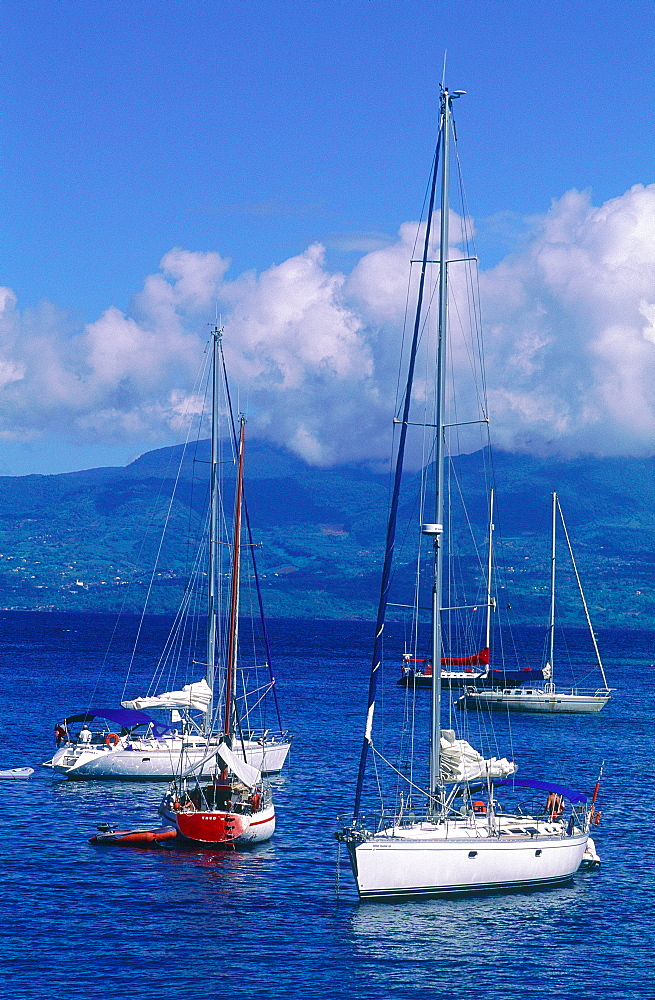 French West Indies, Guadeloupe, Town Of Pointe A Pitre, Sailing Boats Moored In The Marina