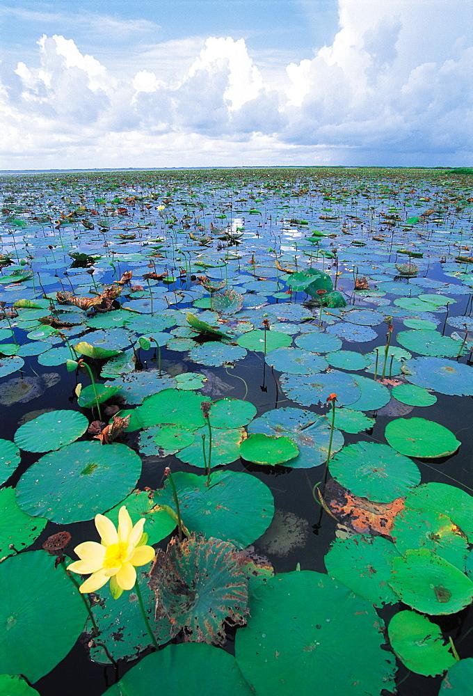 Close Up, Lake Ochekobee, Florida, Usa - 700-3003