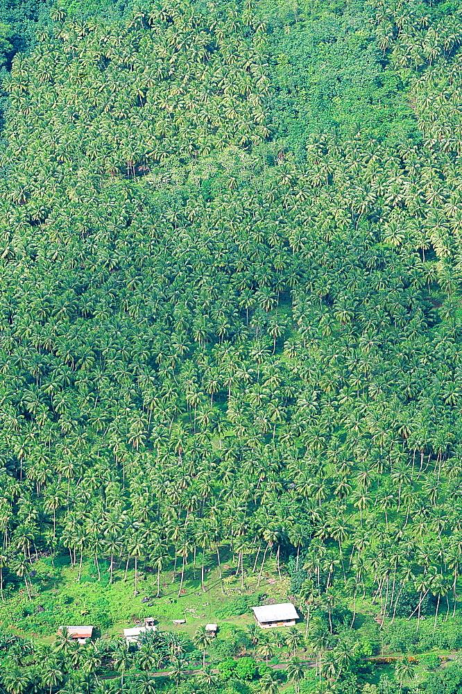 French Polynesia, Marquesas Archipelago, Nuku-Hiva Island, Taipi Vai Valley, Overview On The Palm Plantations