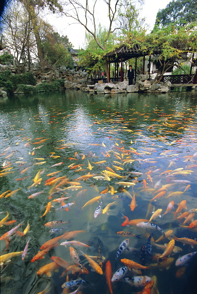 Carp pond, Suzhou, China