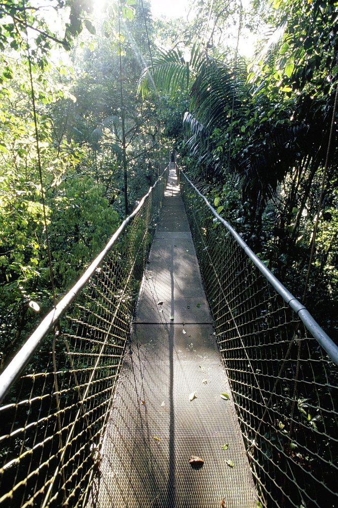 Foot bridge over the forest canopy, Costa Rica, Central America