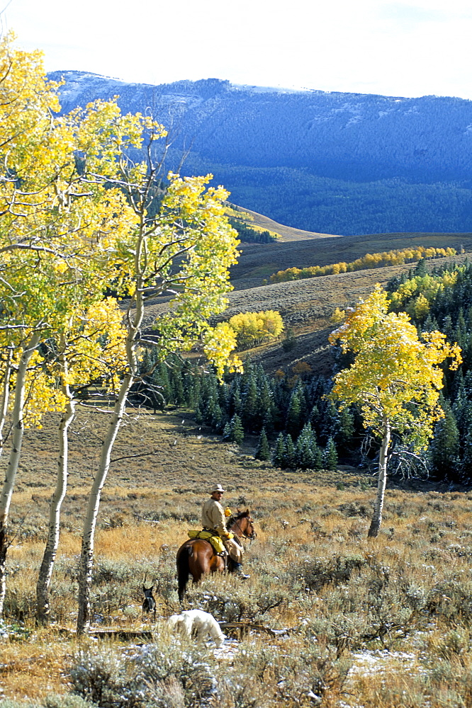Big Horn mountains, Wyoming, United States of America, North America - 700-9856