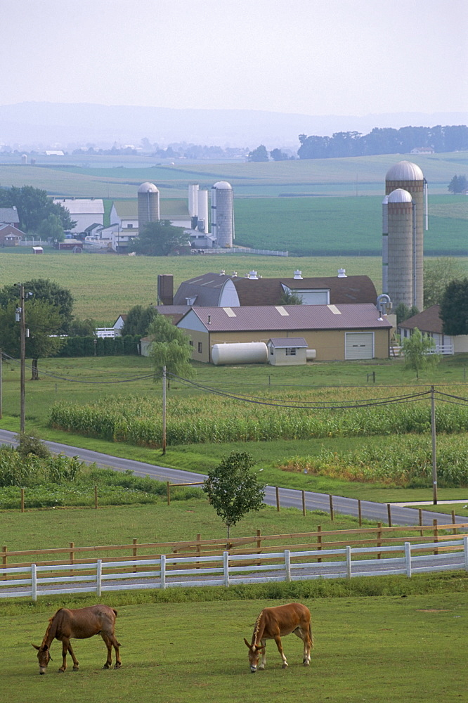Amish country, Pennsylvania, United States of America, North America - 700-9873