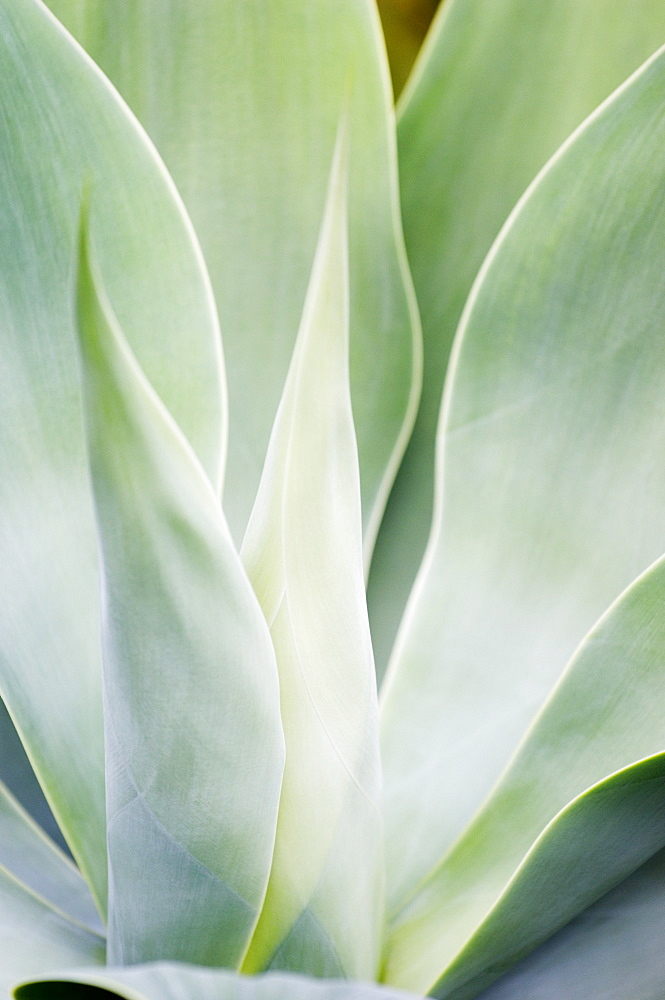 Close-up of plant in Lorro Park, Tenerife, Canary Islands, Spain, Atlantic, Europe - 728-3397